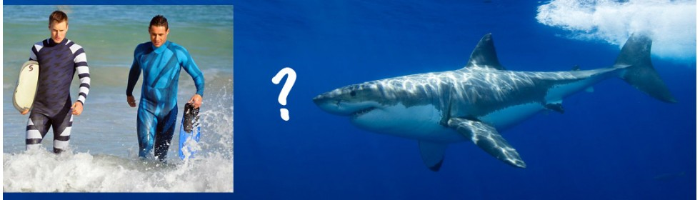 Both+shark